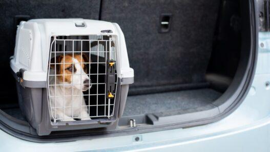 Hundebur til bil